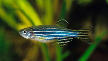 علماء يابانيون يكشفون علاقة الأسماك بتصنيع التكنولوجيا المتطورة