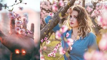 لماذا تعتبر أزهار الكرز اليابانية أحدث موضة في عالم الجمال الطبيعي؟