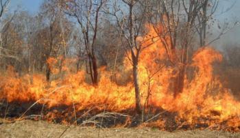 78 حريق اعشاب في الأردن الثلاثاء