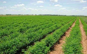 اقتصاديون: غياب القنوات التسويقية والتسهيلات وراء تراجع أسعار المنتجين الزراعيين