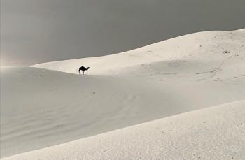 برَد غزير يكسو جنوب السعودية بالأبيض (صور، فيديو)