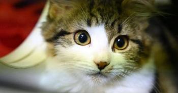 إصابة أول حيوان أليف بكورونا في بريطانيا