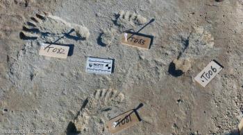 اكتشاف آثار أقدام عمرها 23 ألف سنة ..  لمن تعود؟