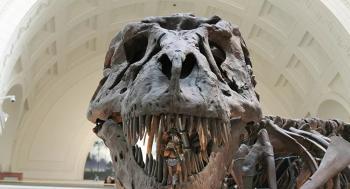باحثون يتوصلون إلى سرعة مشي أكبر الديناصورات من خلال تحليل هيكله