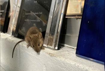 قضمت كل شيء ..  إجلاء معتقلين من سجن أسترالي غزته الفئران