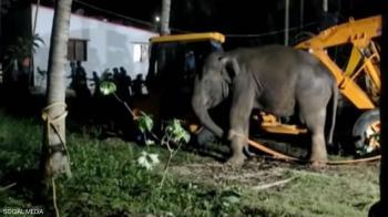 الهند ..  إنقاذ فيل سقط في مكان غريب (فيديو)