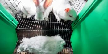 السجن لناشطين حرروا أرانب مختبرات في فرنسا