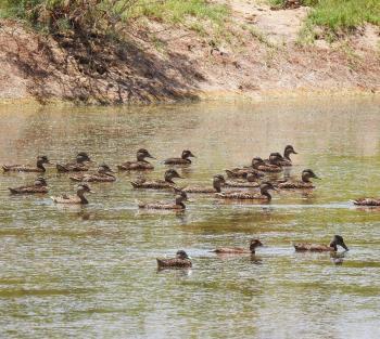 محمية الأزرق المائية تقدم خصومات تشجيعية