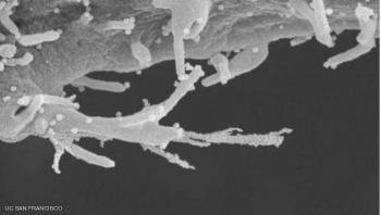 دراسة: فيروس كورونا يهاجم خلايا الجسم مثل الزومبي