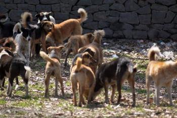 كريشان يمنع قنص او تسميم الكلاب الضالة