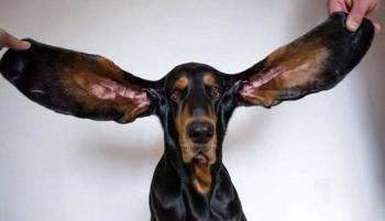 كلب يدخل موسوعة جينيس بأطول أذنين في العالم