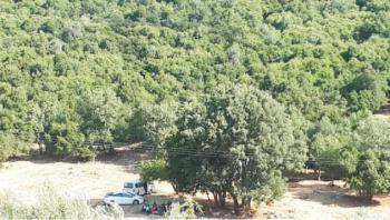 التنزه العشوائي في عجلون يؤثر سلبا على الطبيعة والبيئة