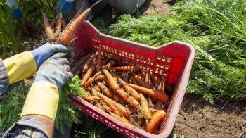 هل نأكل البلاستيك عبر النباتات؟