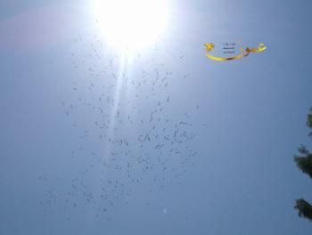 طيور اللقلق تبدأ بالهرب من سماء الأردن