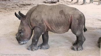 حديقة حيوان بفلوريدا تعلن ولادة أنثى وحيد قرن