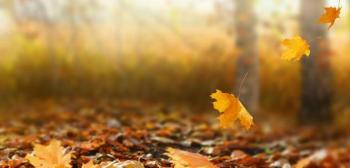 بدء فصل الخريف فلكيا الثلاثاء