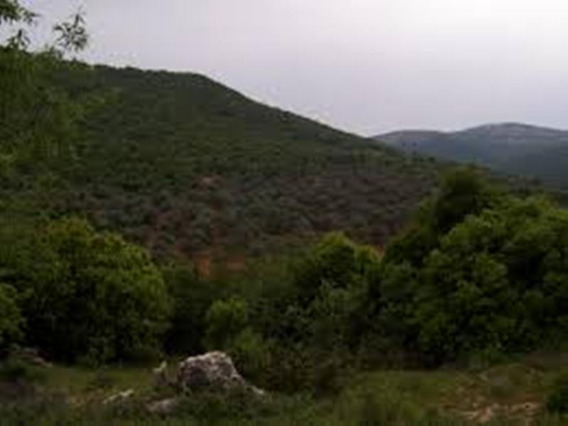 زراعة 650 شجرة على ضفاف نهر الاردن