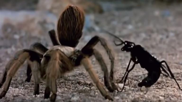 دبور 'يعاقب' عنكبوتا بطريقة عجيبة! (فيديو)