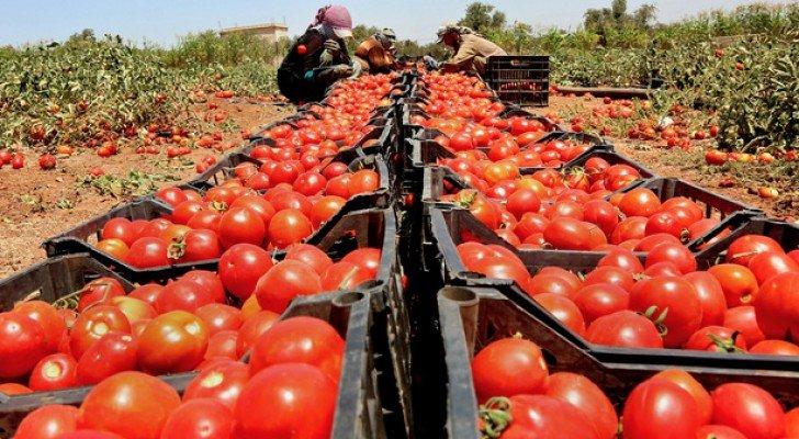 الأردن ينتج 1.7 مليون طن خضروات