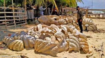 ضبط شحنة رخويات بقيمة فلكية في الفلبين
