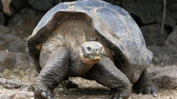 الإكوادور ..  إعادة عشرات السلاحف إلى موطنها بعد حجر صحي