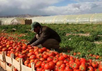 %14.1 انخفاض أسعار المنتجين الزراعيين