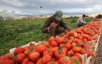 12500 طن صادرات الأردن من الخضار والفواكه خلال أيام العيد