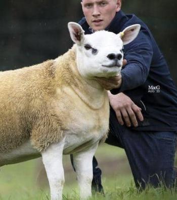 بيع أغلى خروف بالعالم