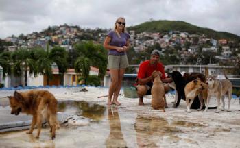 رجل وزوجته يتحديان اعصار ماريا لإنقاذ سبعة كلاب وثماني قطط