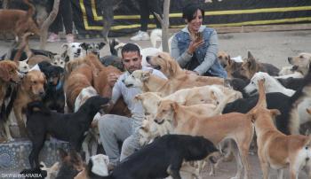 حفلات موسيقية وسفر ..  ملاجئ للحيوانات قرب أهرامات الجيزة