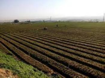 وزيرا الشباب والزراعة يفتتحان معسكرا زراعيا في دير ابي سعيد