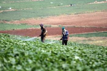 اتحاد المزارعين يثمن تحرير مدخلات الإنتاج واطلاق الشركة الأردنية الفلسطينية