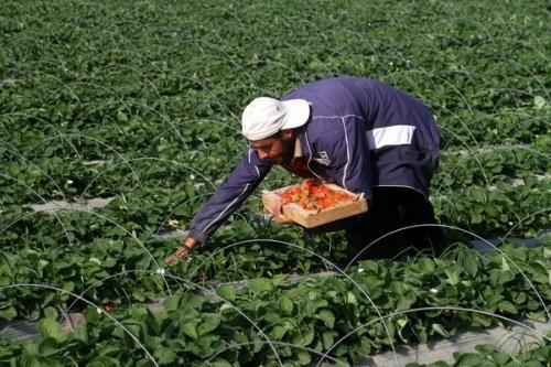 شحن منتجات زراعية اردنية للسوق الروسية والرومانية