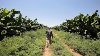 صدور معدل ادارة المخاطر الزراعية في الجريدة الرسمية
