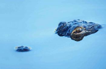 أرعب الصيادين والسكان ..  صيد تمساح ضخم آكل للبشر في ماليزيا