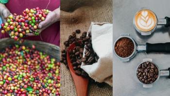 كيف يؤثر تغير المناخ على فنجان قهوتك المعتاد؟
