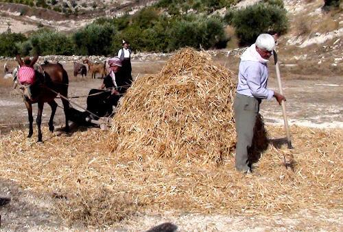 تجار: الأردن لا يشتري في مناقصة لتوريد 100 ألف طن شعيرا