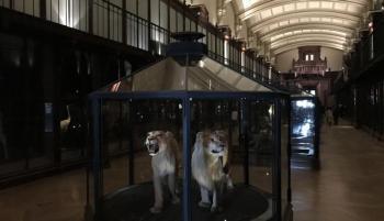 بتقنية الواقع المعزز ..  إحياء 11 نوعاً منقرضاً من الحيوانات في باريس