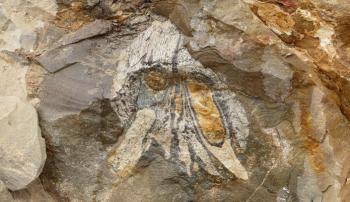 عمره 160 مليون عام ..  العثور على بقايا زاحف مائي مفترس بتشيلي