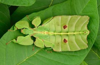 اكتشاف جديد يحل لغز نوع من الحشرات الوارقة عمره قرن من الزمان