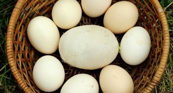 يمني يدخل موسوعة غينيس لوضع أكبر عدد من البيض فوق بعضه ..  فيديو
