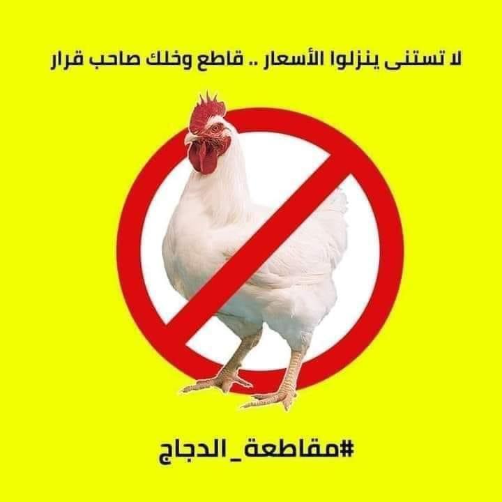 دعوات لمقاطعة الدجاج حتى انخفاض أسعاره