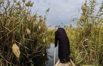 نبتة تجفف أنهار العراق وتقتل ثروته السمكية