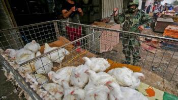 إنفلونزا الطيور تتسبب بنفوق عشرات آلاف الدواجن في العراق