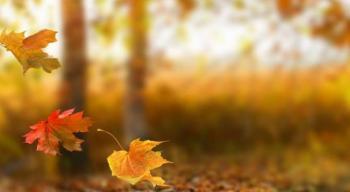 الأربعاء المقبل أول أيام الخريف فلكيا