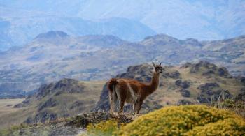 دراسة: رؤية الغابات تحميك من التوتر ..  والجبال تجعلك أكثر تفاؤل