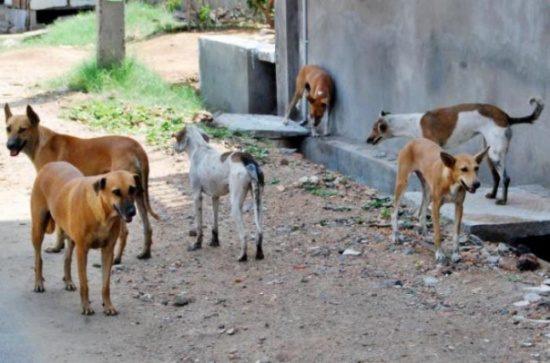 الأمانة: 3323 حملة لمكافحة الحشرات والكلاب الضالة