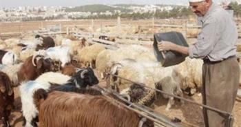 الزراعة تحذر مربي المواشي والدواجن