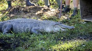 أستراليا ..  جدة شجاعة تنقذ شخصا من هجوم تمساح عملاق