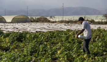 حنيفات: الأردن رفض مشروع قرض من البنك الدولي يخص القطاع الزراعي